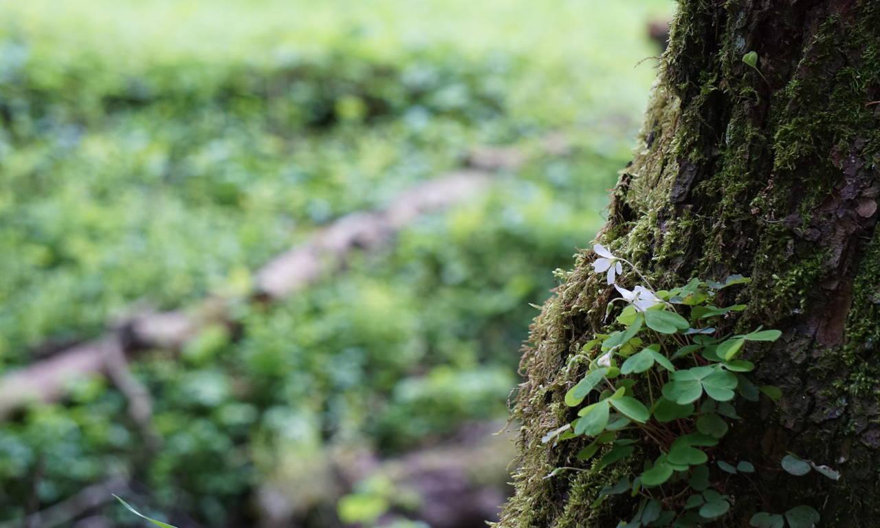 Seltene einheimische Pflanzen und Kräuter.